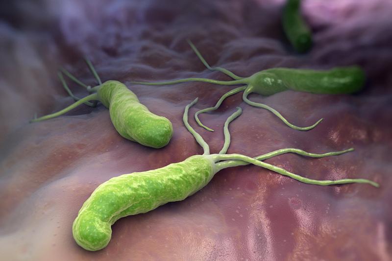 Бактерия хеликобактер при оральном сексе