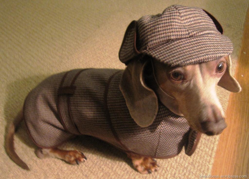 Шьем одежду для собак самостоятельно