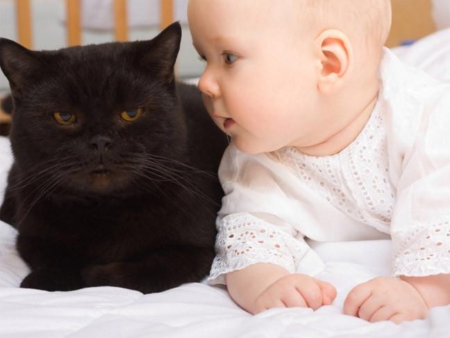 Кошечка ухаживает за ребенком, как за своим котенком...