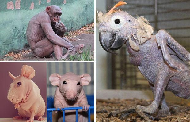 Эти животные больше похожи н…
