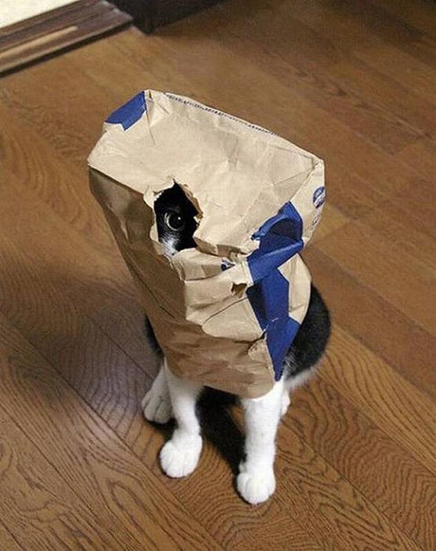 Кошки, которые не умеют играть в прятки
