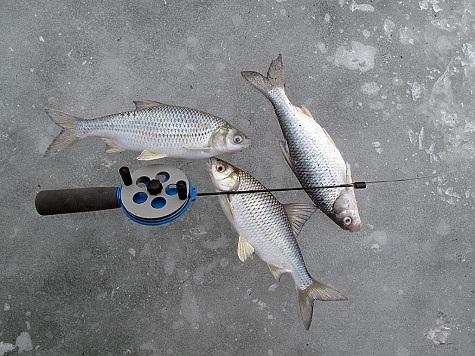 стасов астраханской области видео о рыбалке