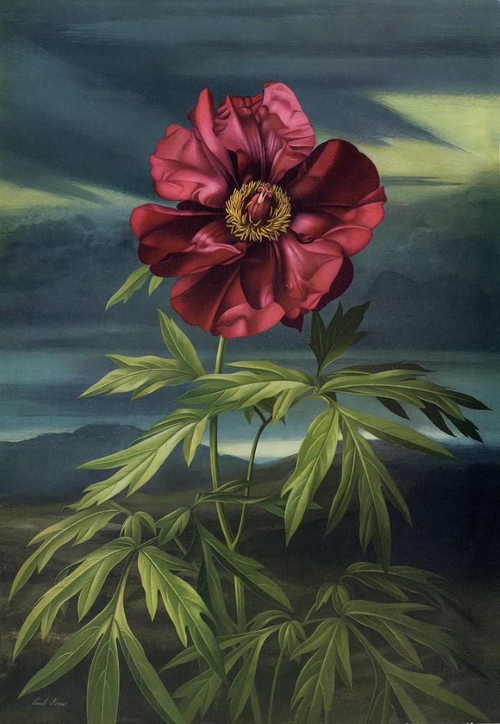 Он считается одним из лучших ботанических художников последних десятилетий