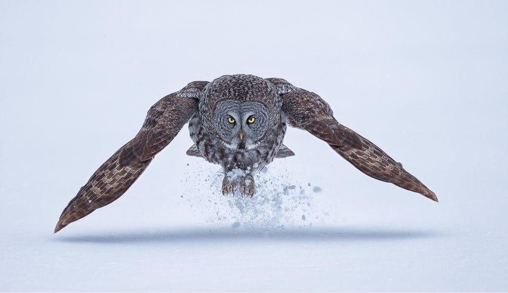 natgeo10 Topo Fotografias National Geographic setembro