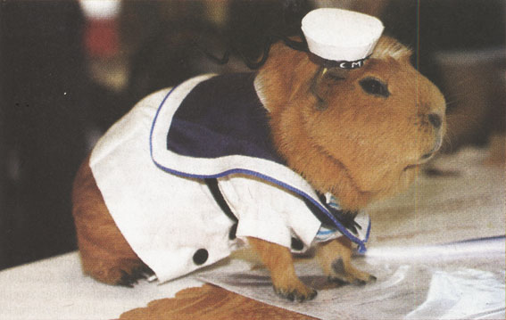 Морячок с пятачком