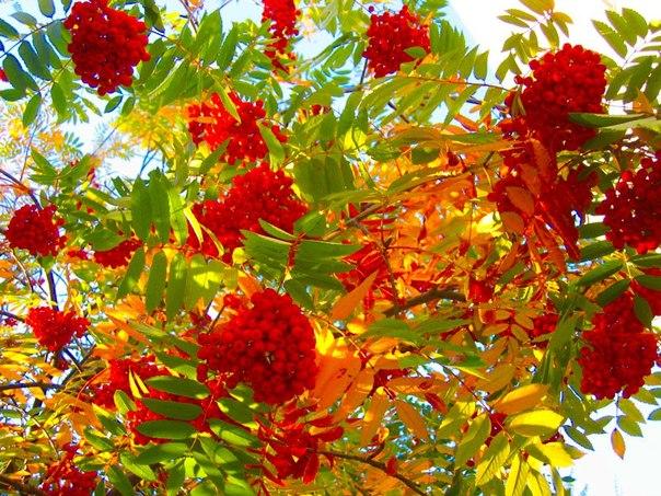 Осень - самые полезные ягоды. И этим необходимо воспользоваться!