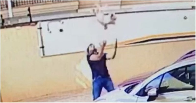 В Бразилии мужчина поймал упавшую с девятого этажа собаку
