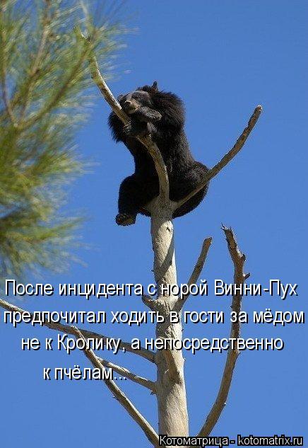 Котоматрица: После инцидента с норой Винни-Пух предпочитал ходить в гости за мёдом не к Кролику, а непосредственно  к пчёлам...