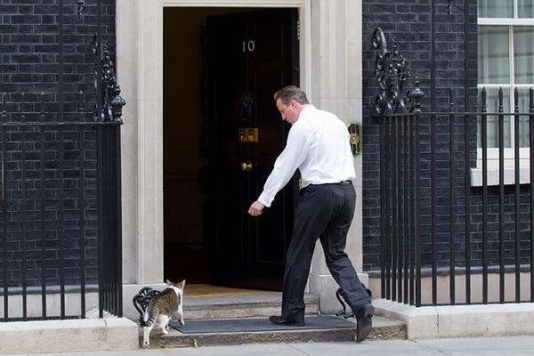Полицейский пнул кота британского премьера Кэмерона
