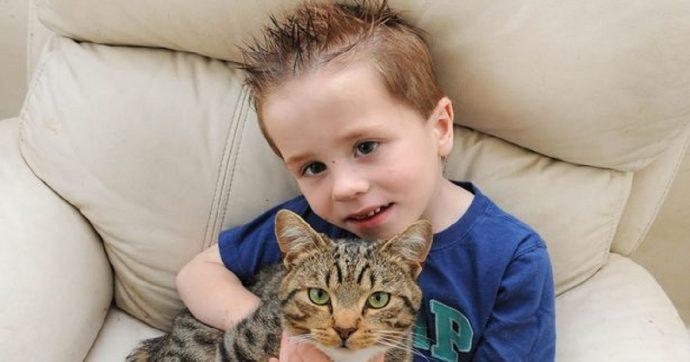 Полосатый защитник: котик ра…