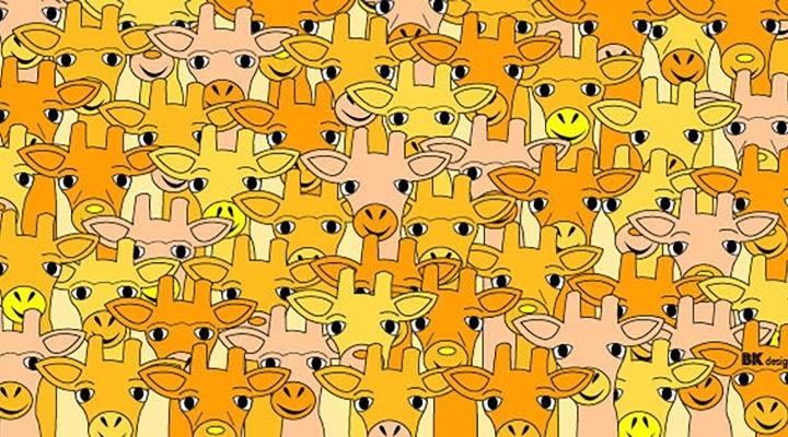 Сможешь ли ты найти магистра Йоду среди жирафов?