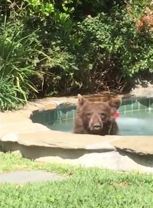 Медведь, который проводит ле…