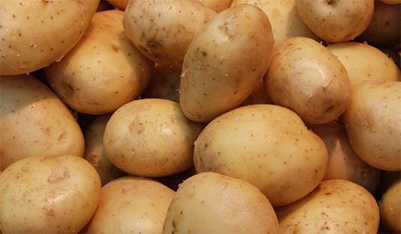 Выращивание картофеля. Я люблю экспериментировать