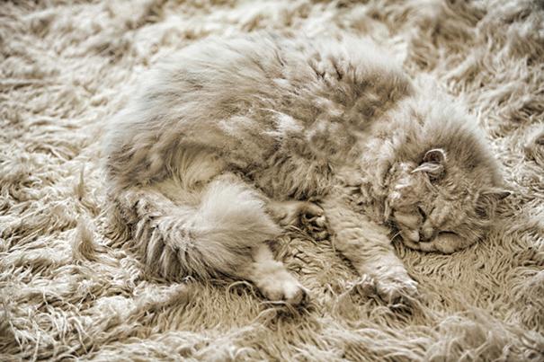 15 замаскировавшихся кошек, которым вы точно проиграете в прятки