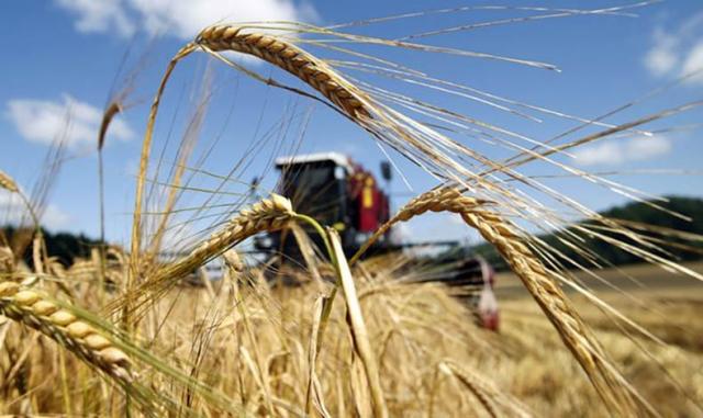 Минсельхоз России: на 6 ноября собрано 114,2 млн тонн зерна
