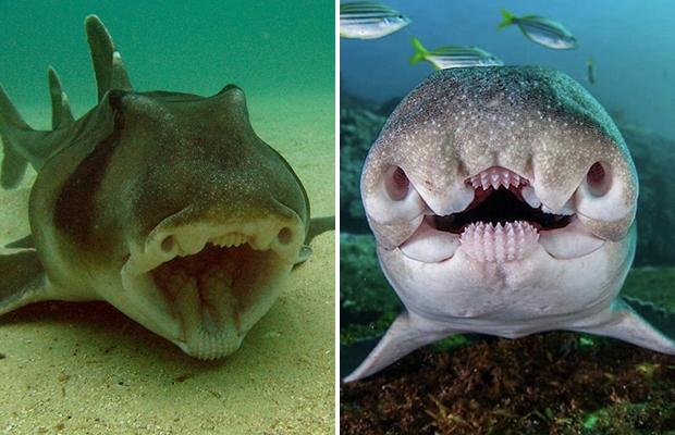 Рыба, у которой странное всё