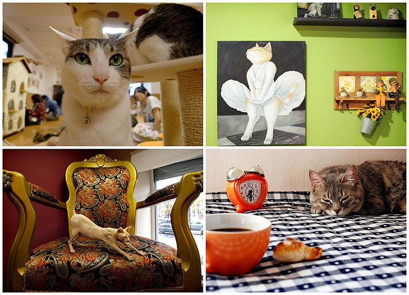 BIGPIC6 Самые необычные «кошачьи» кафе из разных стран мира