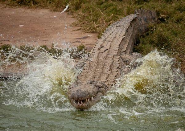 Самые опасные животные в мире. Кто бы мог подумать, что они живут буквально среди нас!