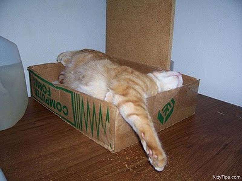 cats 6 25 кошачьих поз для сна