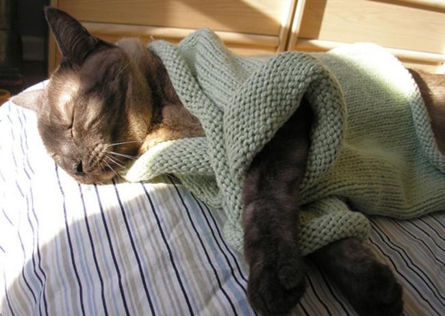 Спящая богиня  кардиган, кот