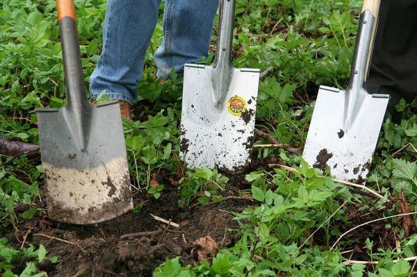 Копать или не копать, как именно обрабатывать почву - каждый огородник решает для себя
