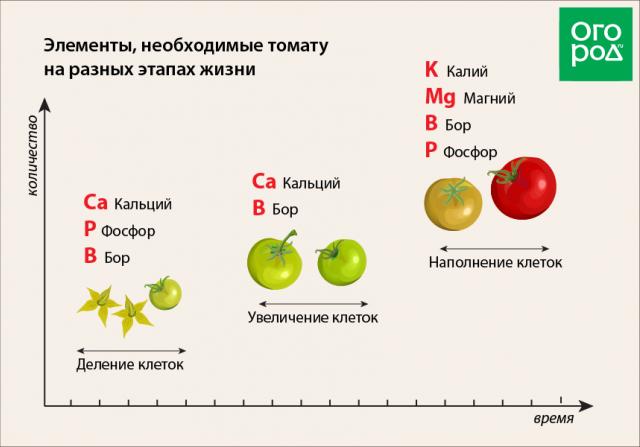 польза томатной ботвы