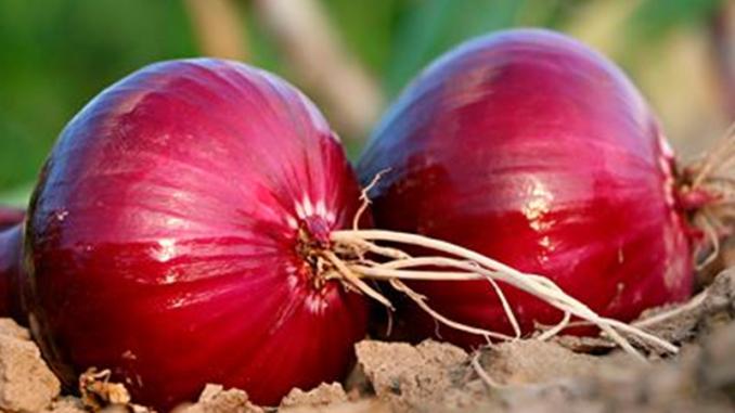 Вот как употреблять фиолетовый лук, чтобы избавиться от диабета, холестерина, гриппа, простуда, запора и укрепить сердце и сосуды!