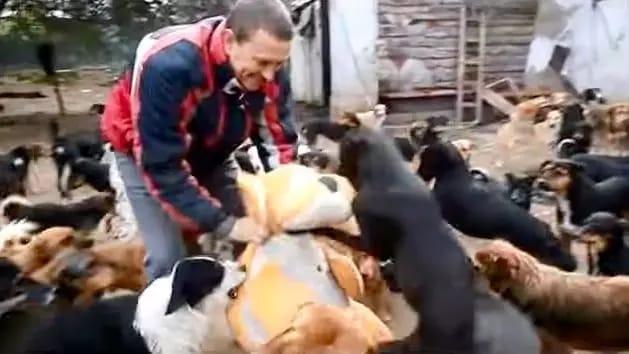 Он не мог смотреть, как страдают животные, поэтому спас 450 собак!