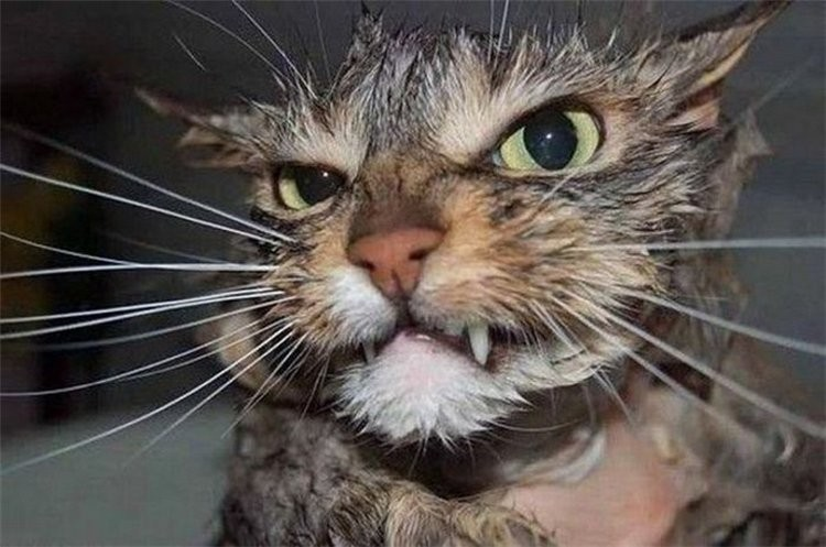 Кушающие коты картинки