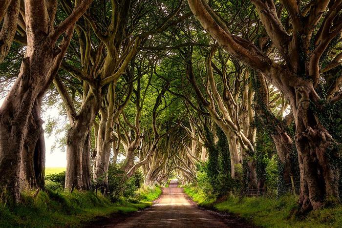 15 удивительных лесов во всем мире