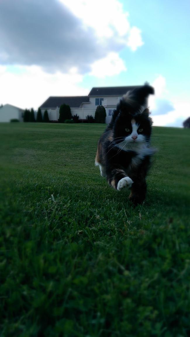 5. Резвится по свежескошенной траве  весна, животные