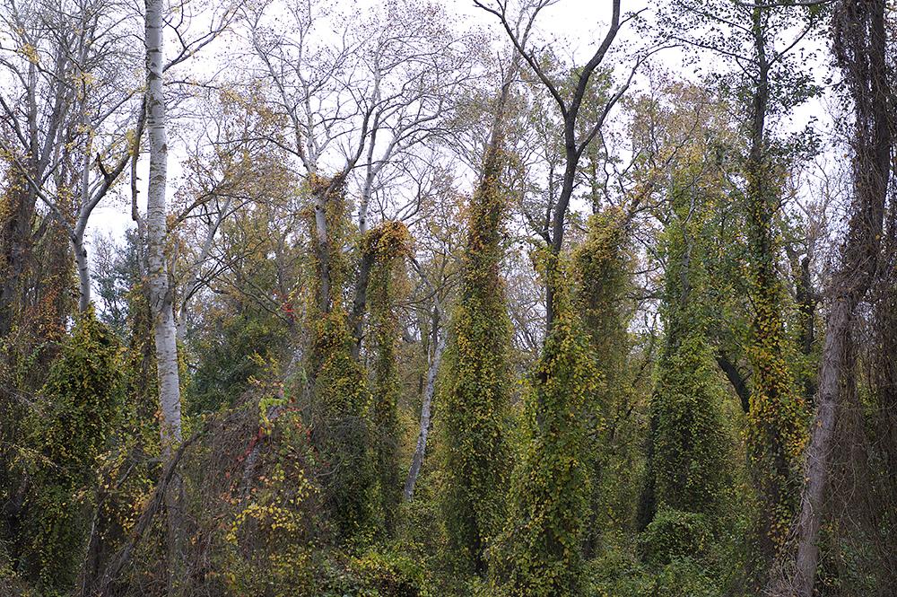 Я в Самурском лесу