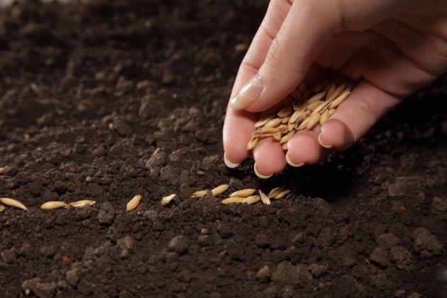 Посев семян: чем крупнее, тем глубже