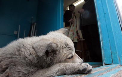 В Москве волонтеры ищут хозяев для бездомных собак