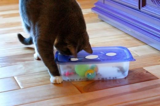 Головоломка лоя кота