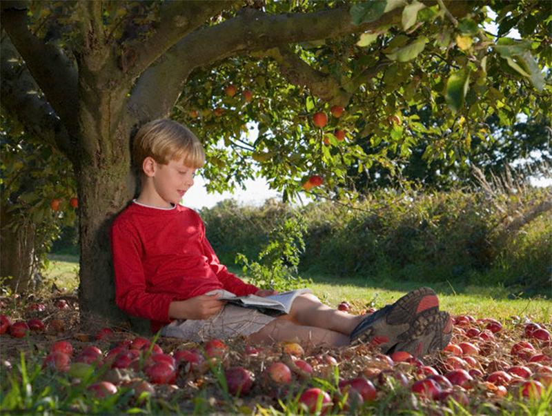 Притча. Этот мальчик каждый день приходил к яблоне. Но когда он вырос, случилось непоправимое...