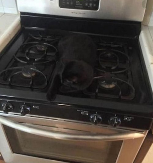 Чёрные кошки — настоящие мастера маскировки