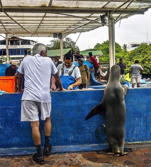 Необычный посетитель рыбного базара (1)