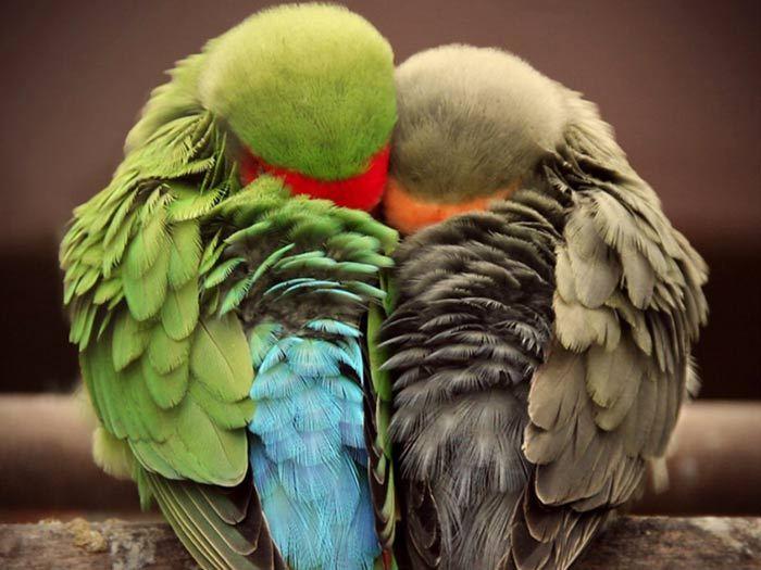 25 ярких фотографии птиц, глядя на которые остаётся только восхищаться талантами матери-природы