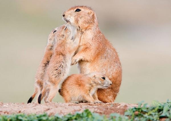Животные тоже любят свои семьи