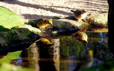 отражение в воде природа 17 (450x281, 146Kb)