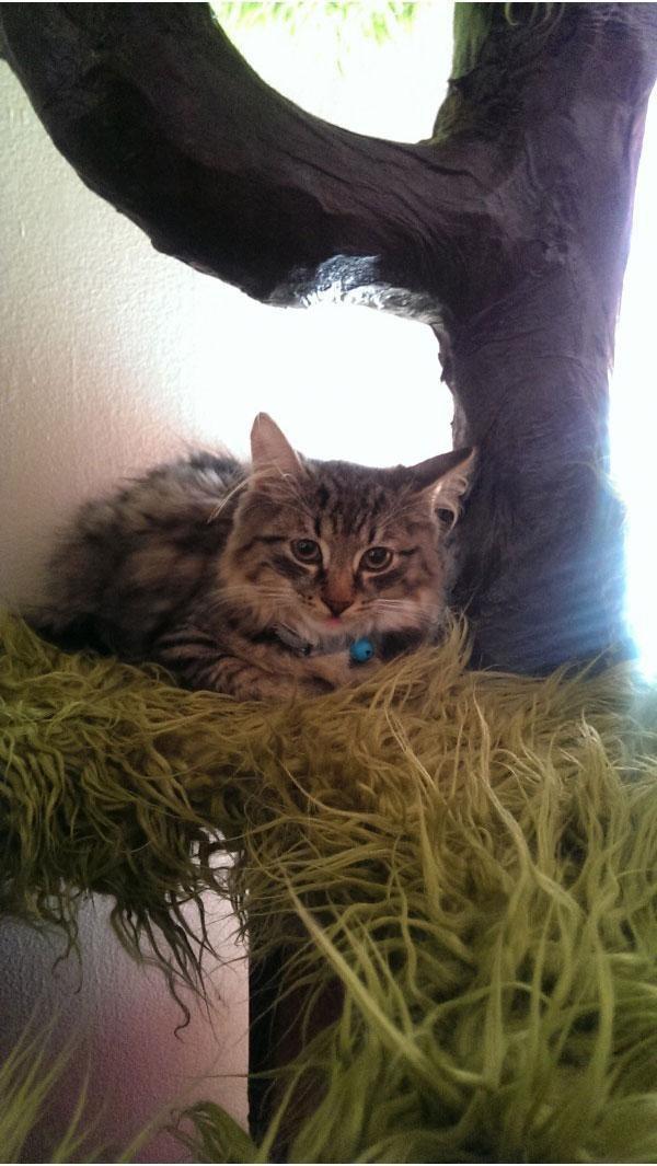 Дом для кота своими руками дом, коты, своими руками