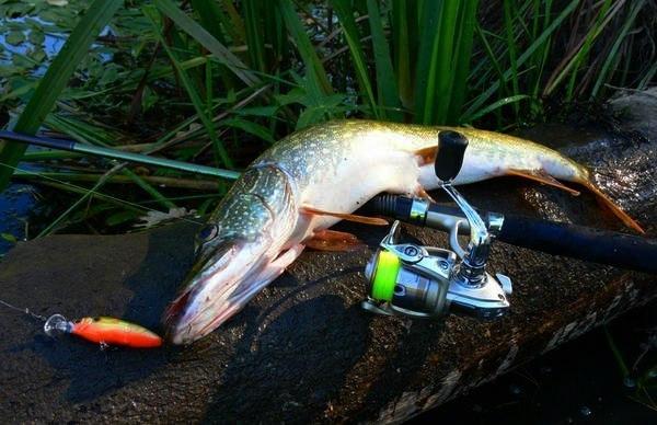 когда можно рыбачить на спининг