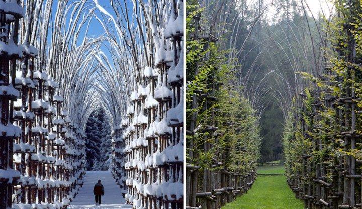 собор из деревьев джулиано маури (3)