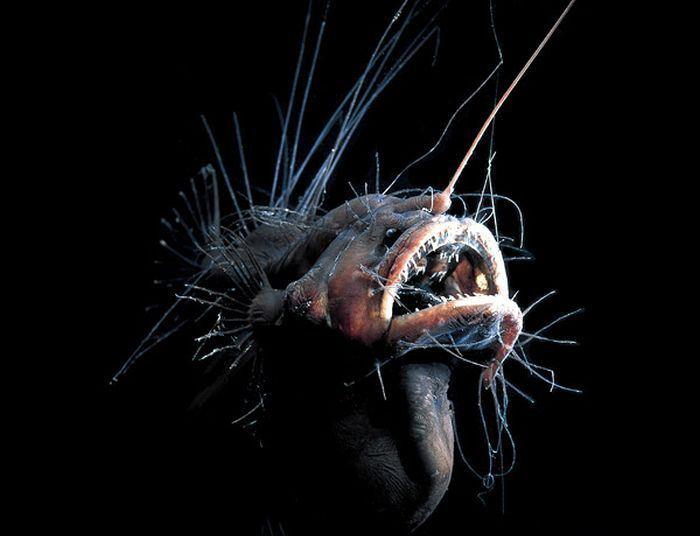 Глубоководные рыбы марианской впадины видео