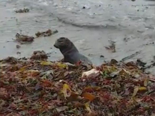 «Прощай, малыш!» Люди гуляли по берегу океана и увидели, как в водорослях что-то шевелится…