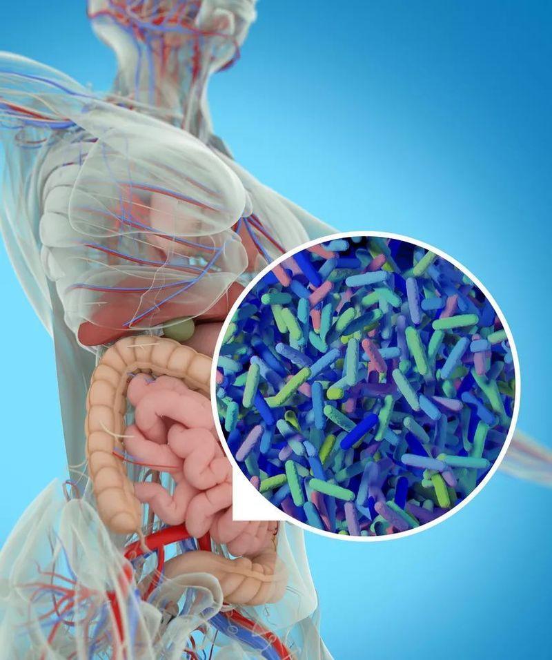 В чём связь остеопороза и микрофлоры кишечника