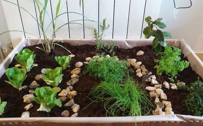 Мини-сад в квартире своими руками