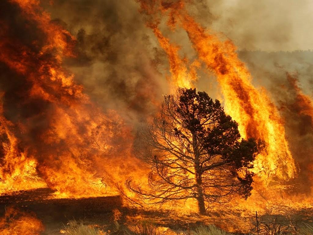 Число жертв разрушительных пожаров в Калифорнии возросло до 42