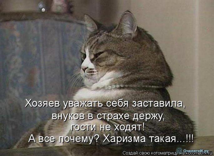 Юморная котоматрица 33